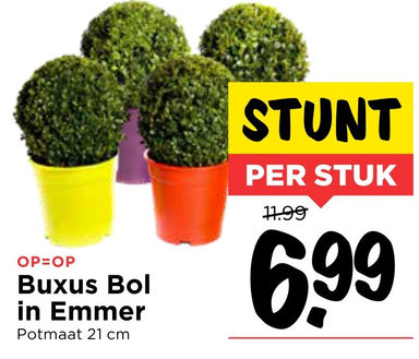 Buxus Bol in Emmer